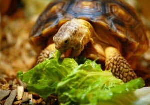 Exotic Pet Care Information