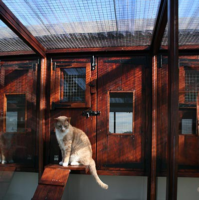 cattery2
