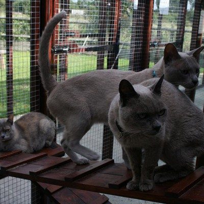 cattery3